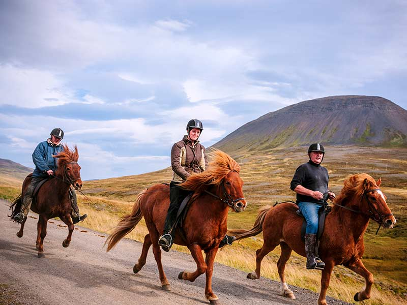 Three riders gallop their Icelandic ponies