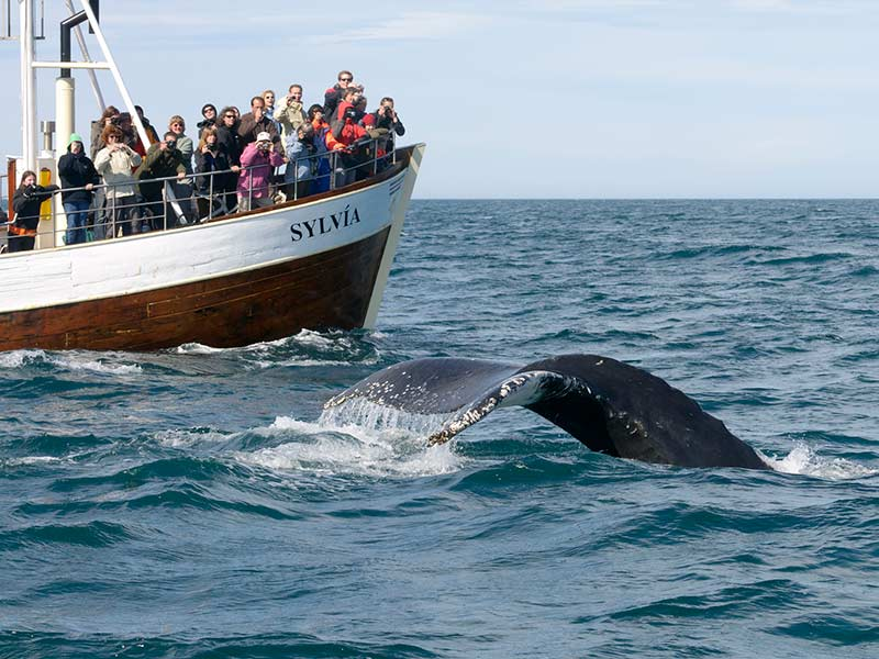 a fishing boat with tourists finds a whale