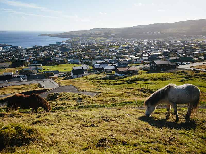 The view over Tórshavn, the capital of Faroe Islands with horses in the foreground.